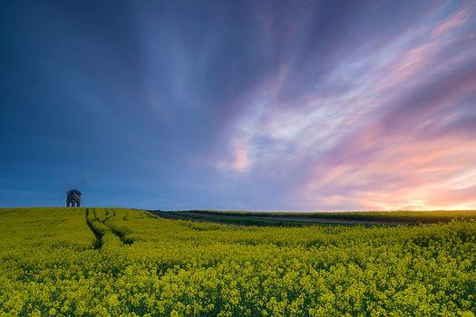 sunset, field, flowers, mill, landscape