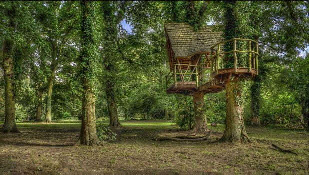 Kelmarsh Hall, Northamptonshire, England, forest, park, trees, landscape