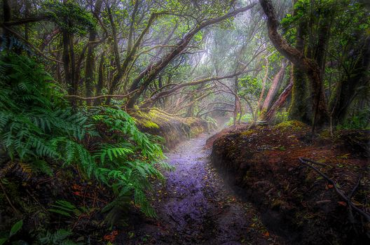 madera, árboles, sendero, naturaleza