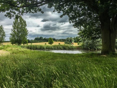 campo, estanque, hierba, árboles, paisaje