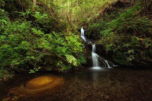 madera, árboles, masa de agua, cascada, naturaleza