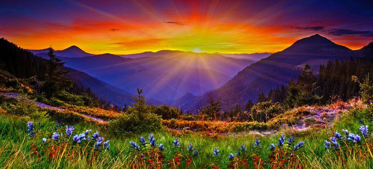 puesta del sol, montañas, árboles, flores, vista, paisaje