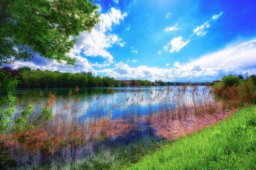 summer, River, trees, landscape