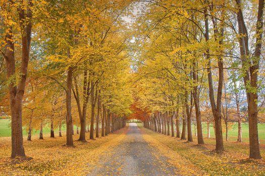 autumn, alley, road, trees, landscape