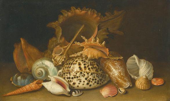 still life, shells, seafood
