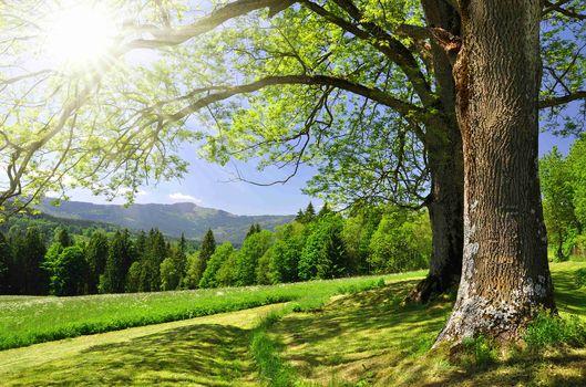 field, trees, forest, Sun rays, landscape