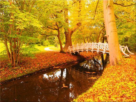 autumn, park, trees, bridge, water, landscape