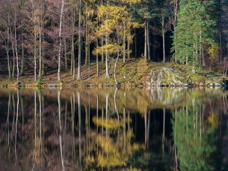 See, Herbst, Holz, Bäume, Landschaft, Reflexion