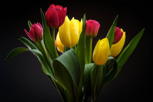 flowers, bouquet, tulips, flora, Black background
