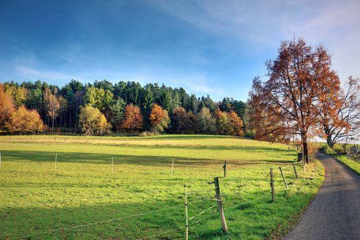 automne, champ, route, arbres, paysage