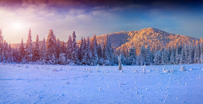 winter, snow, the mountains, trees, sunset, landscape