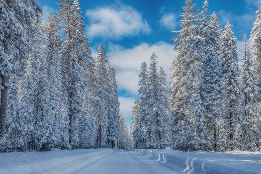 winter, road, forest, trees, landscape, Crater Lake National Park