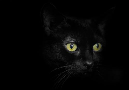 cat, cat, sight, Black background