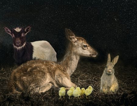 deer, rabbit, goat, chickens