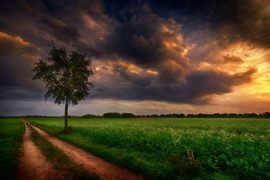 sunset, field, road, tree, landscape