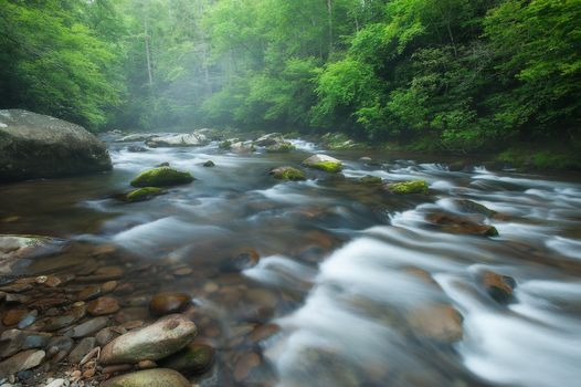 River, stones, flow, forest, trees, landscape