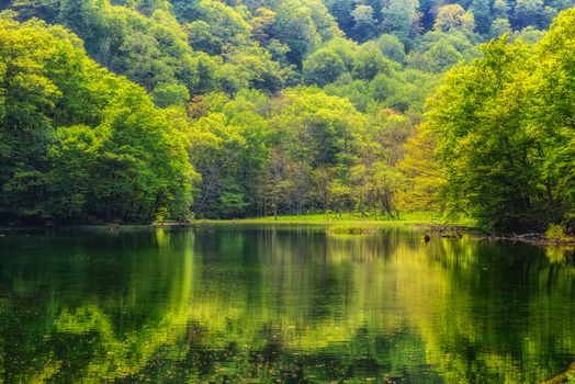 forest, trees, water, landscape