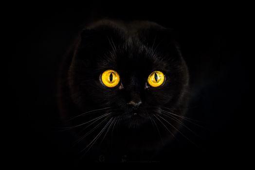 gato negro, gato negro, fondo negro, ojos, oscuridad, están ardiendo, bozal, animal