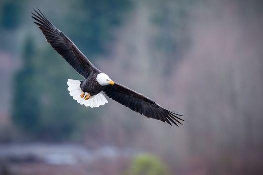 Крылатые хищники (16:9, :10, 30 шт)