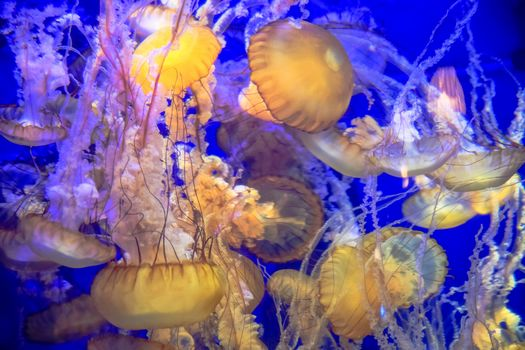 sea, water, liquid, Marine life, jellyfish, glow, undersea world