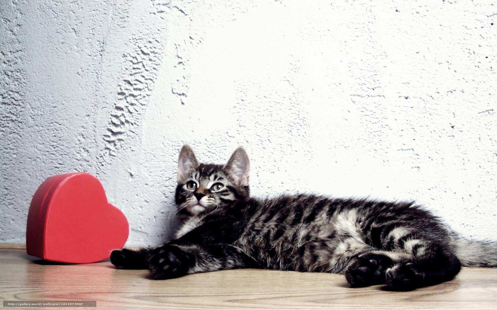 Кот, сердце — #181437