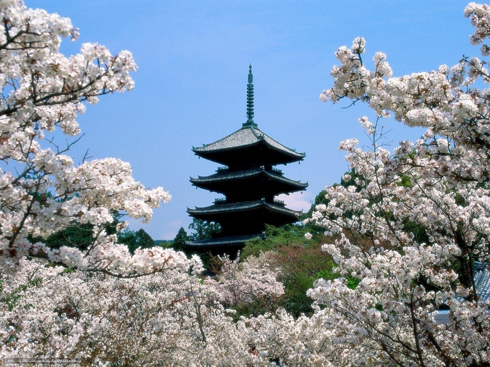 свои картинка пагода и сакура преподаватели это специалисты