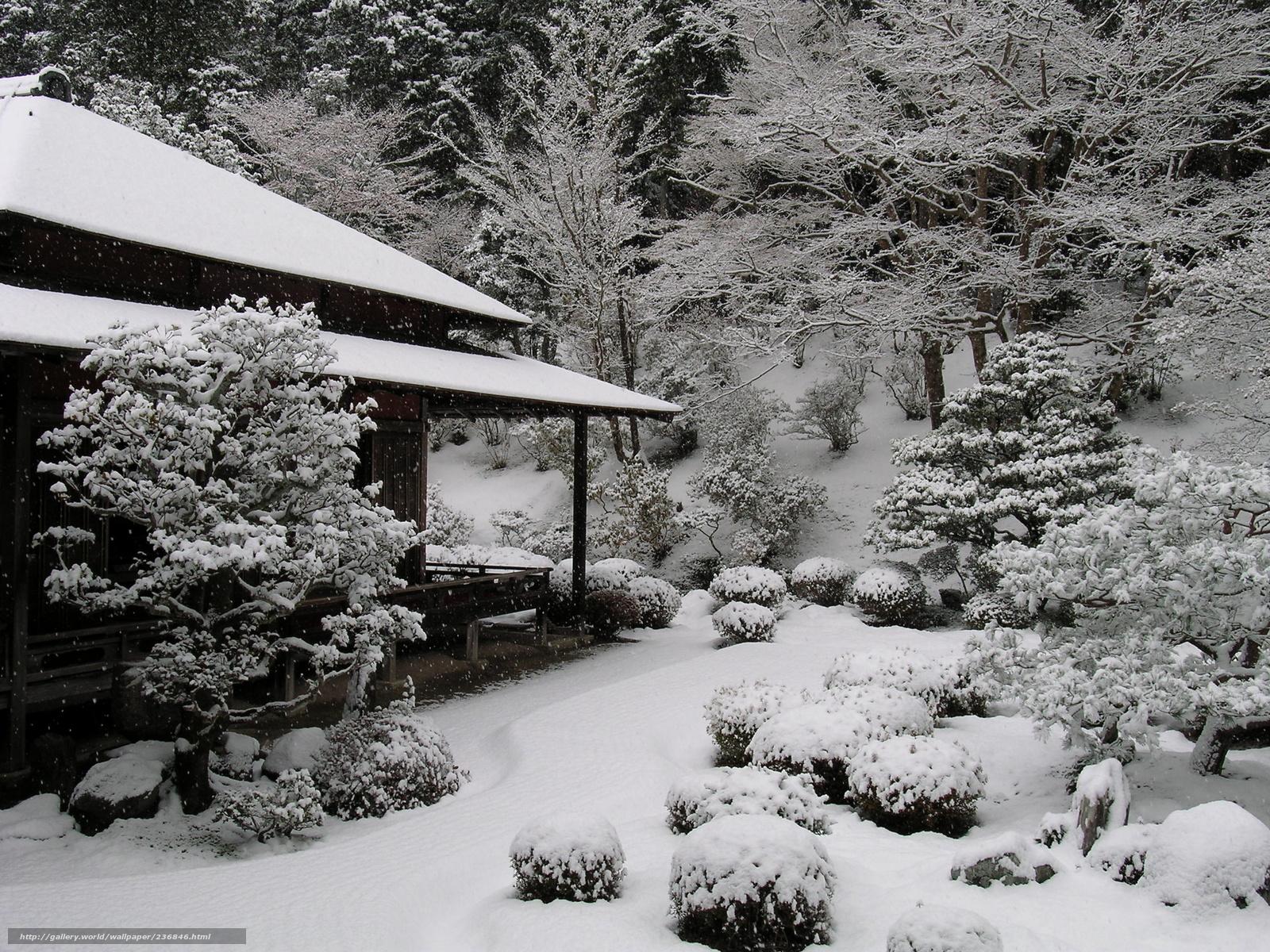 дерево предпочитает японский лес зимой фото поговорим том