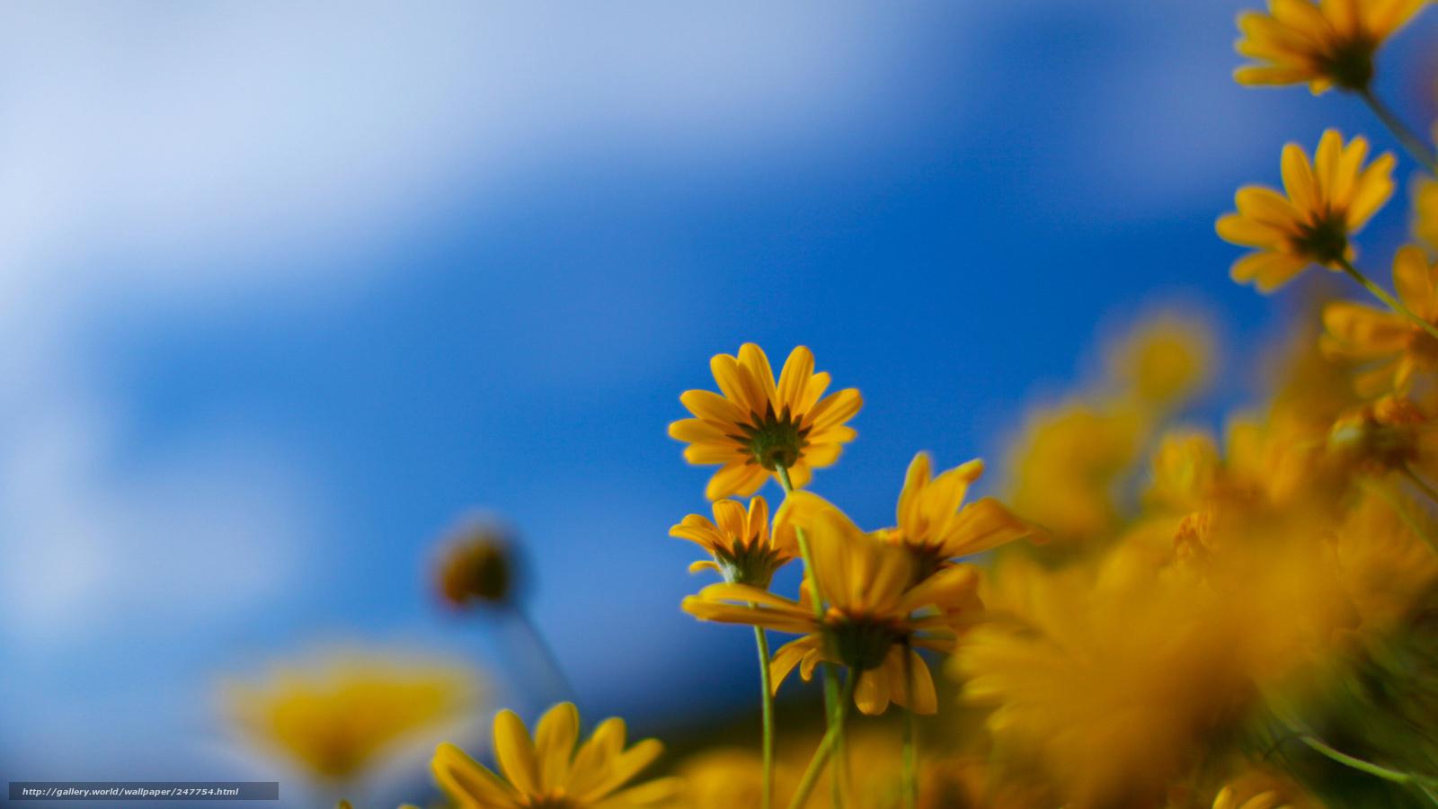 Sfondi hd natura primavera
