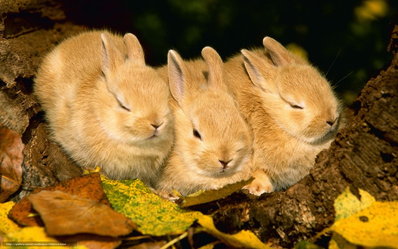 Красивые картинке про животных