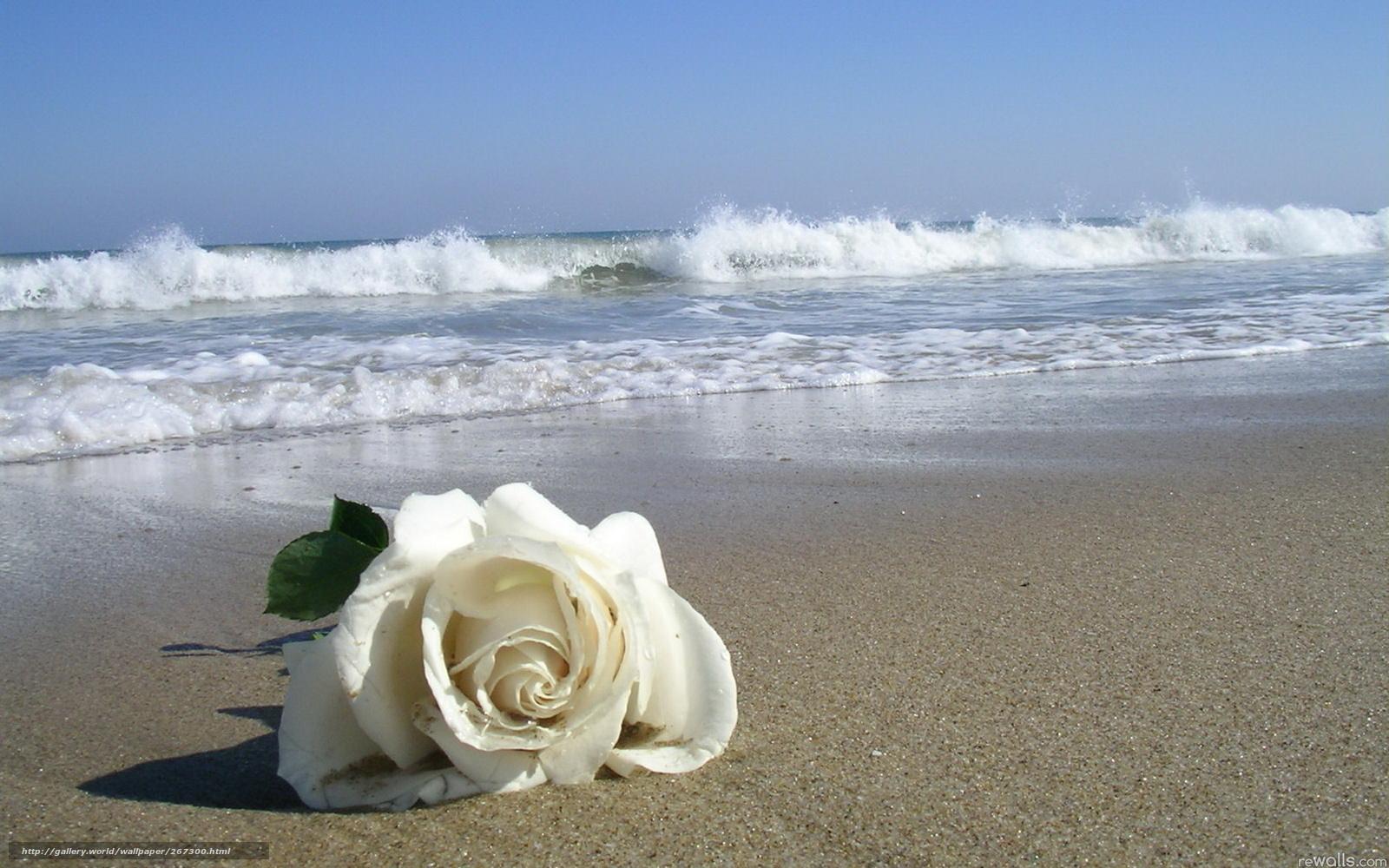 Розы на берегу моря фото
