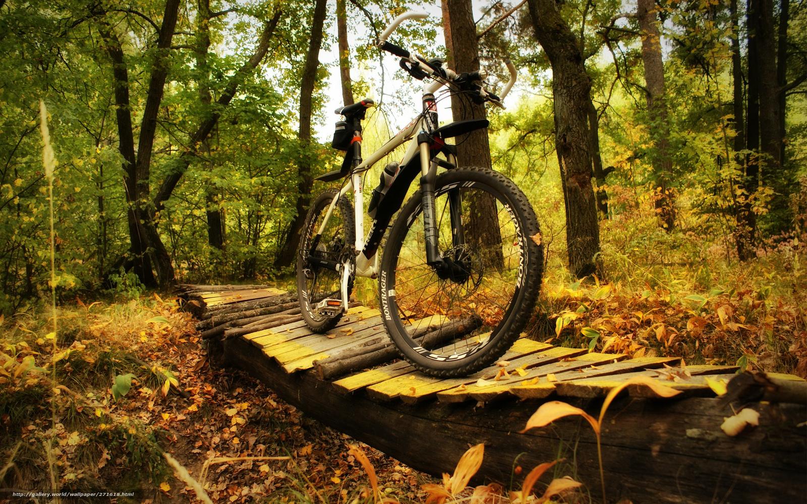 картинки велосипедиста в лесу здесь предлагают
