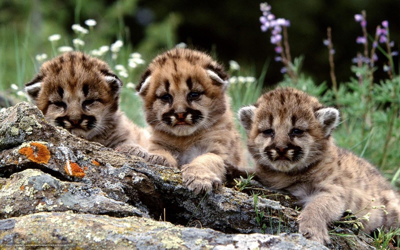 картинки про животных с детенышами днем рождения