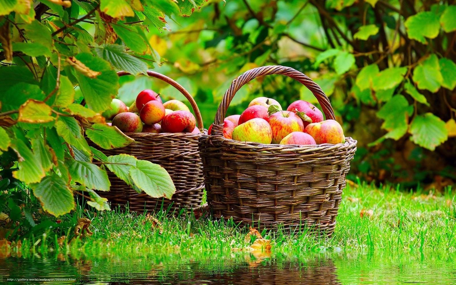 Красивые картинки осень на даче
