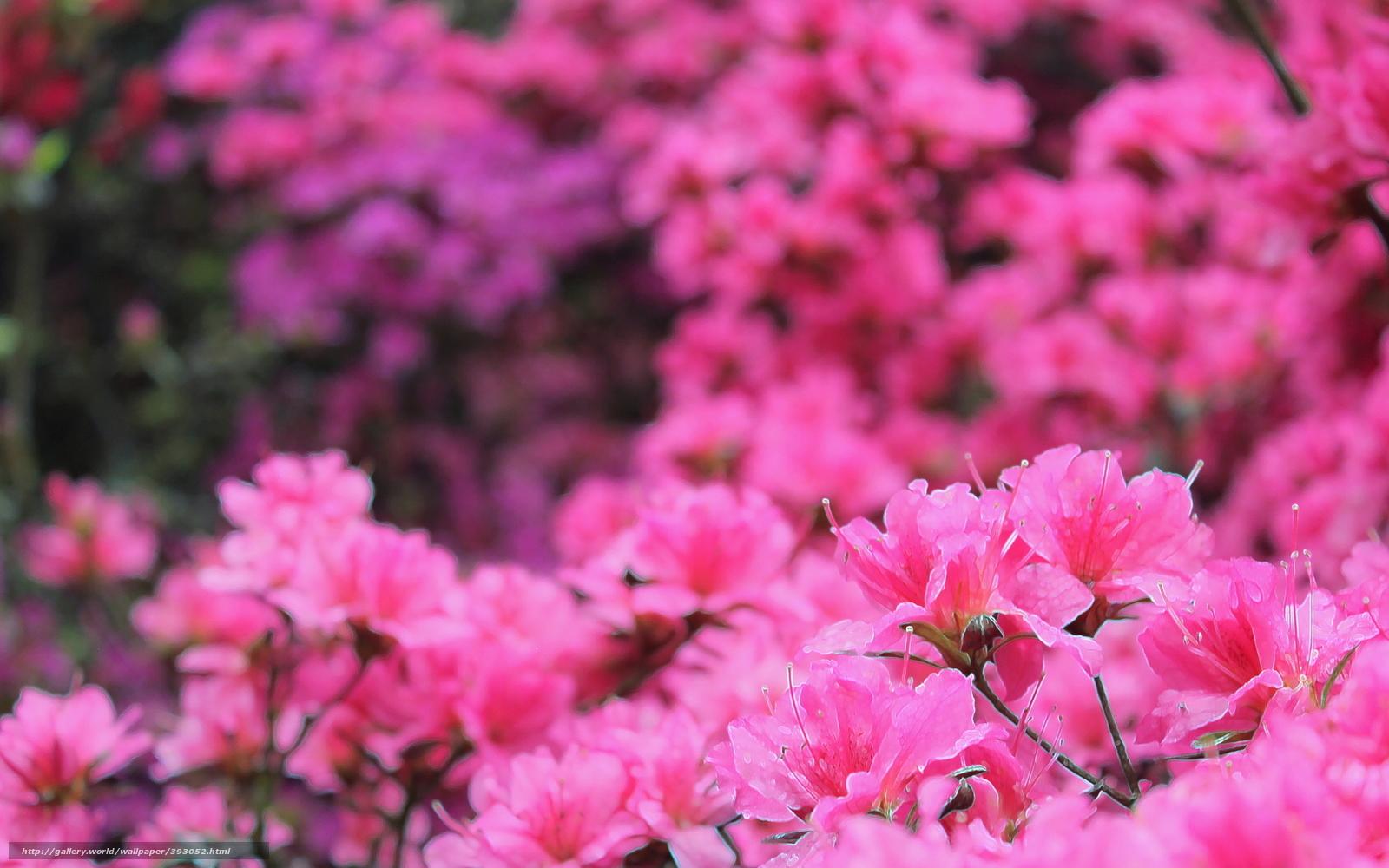 его картинки рабочий стол цветочки розовым время основания усадьбы