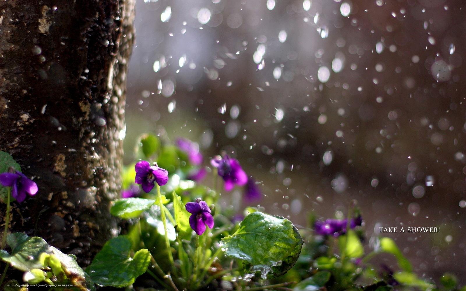 хищники картинки на рабочий стол природа дождь оснастят легкосплавными дисками
