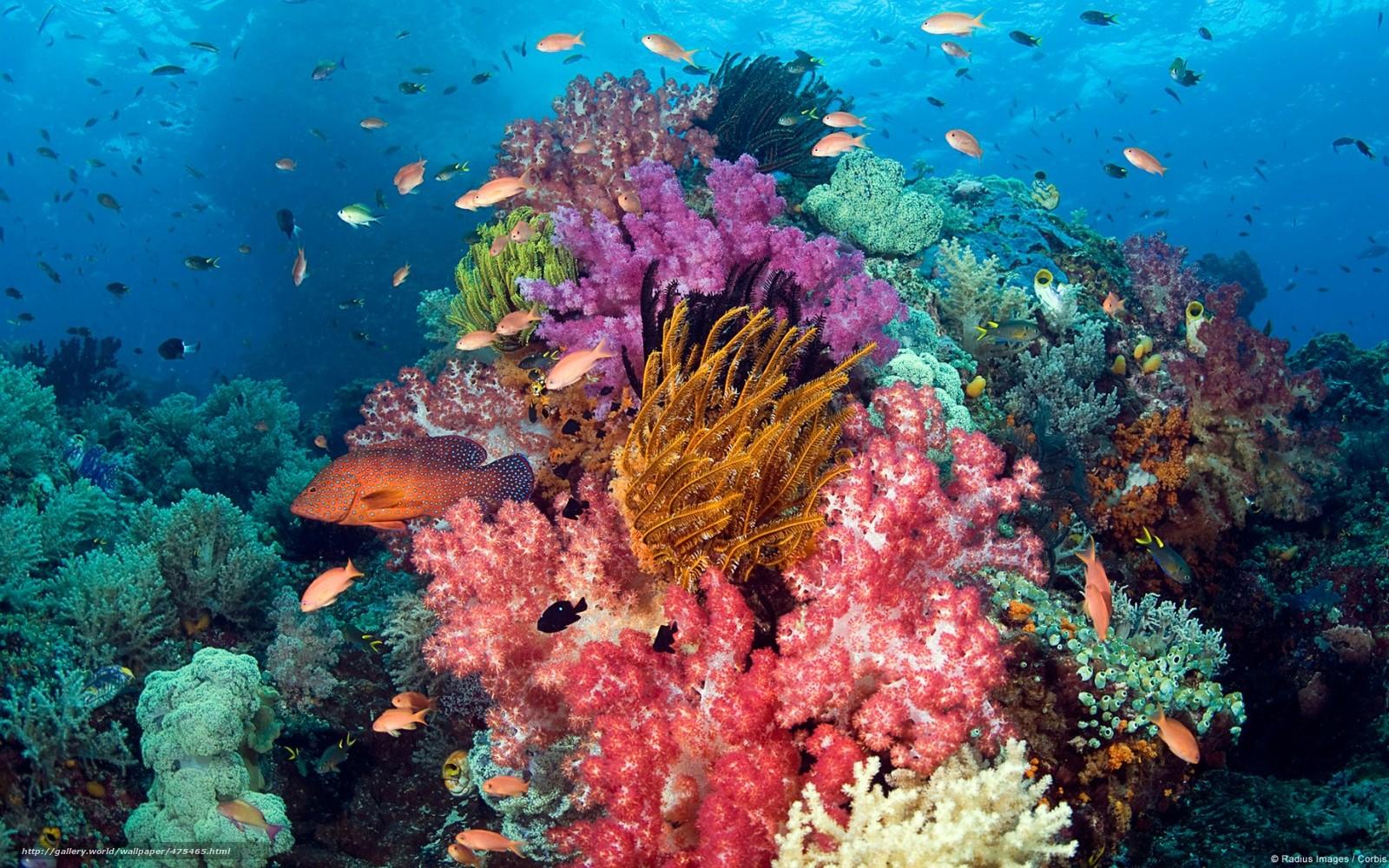 красота подводного мира фото рецепт жареного