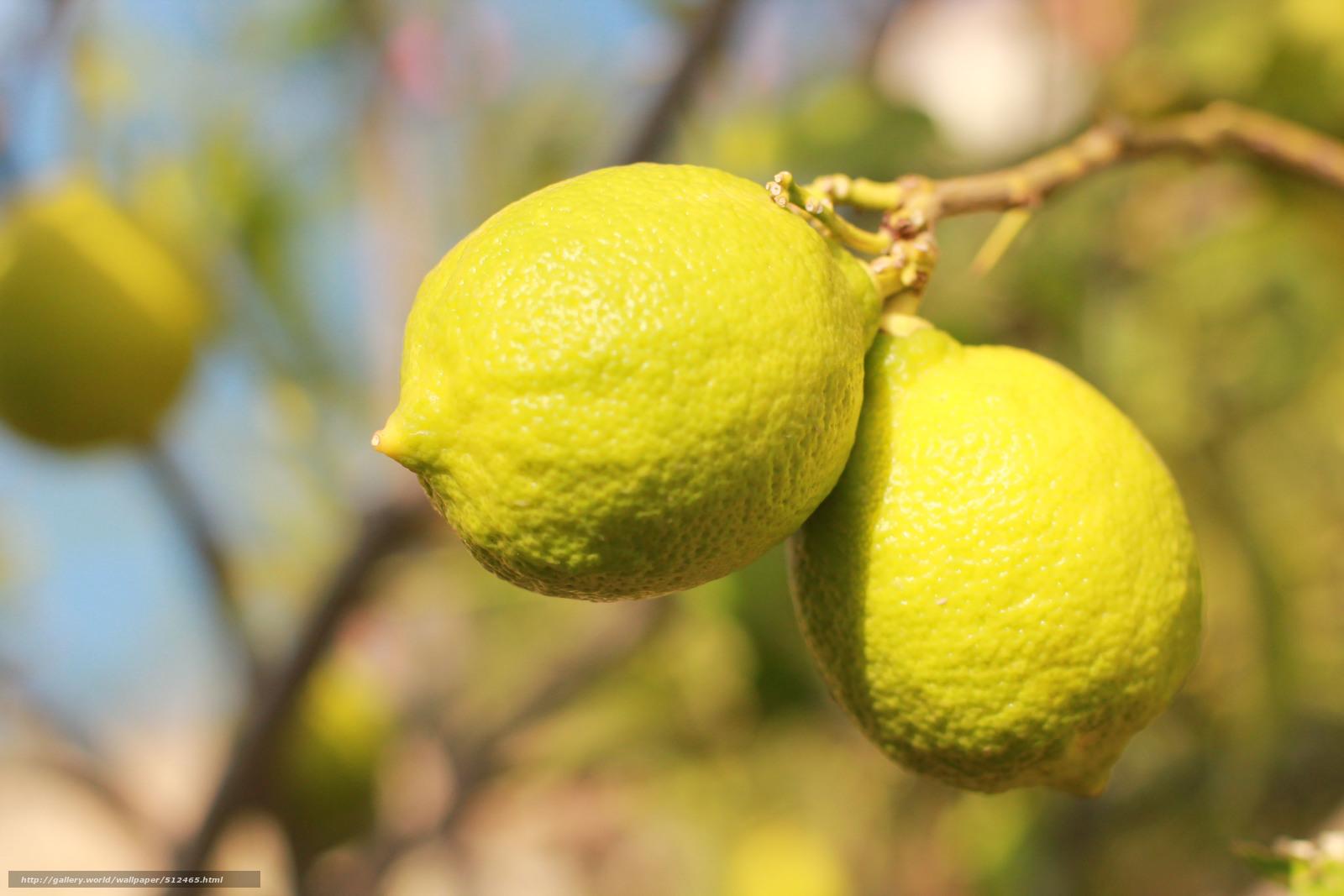 летнее время лимоны крупные на ветке фото гарнитур выполненная таких