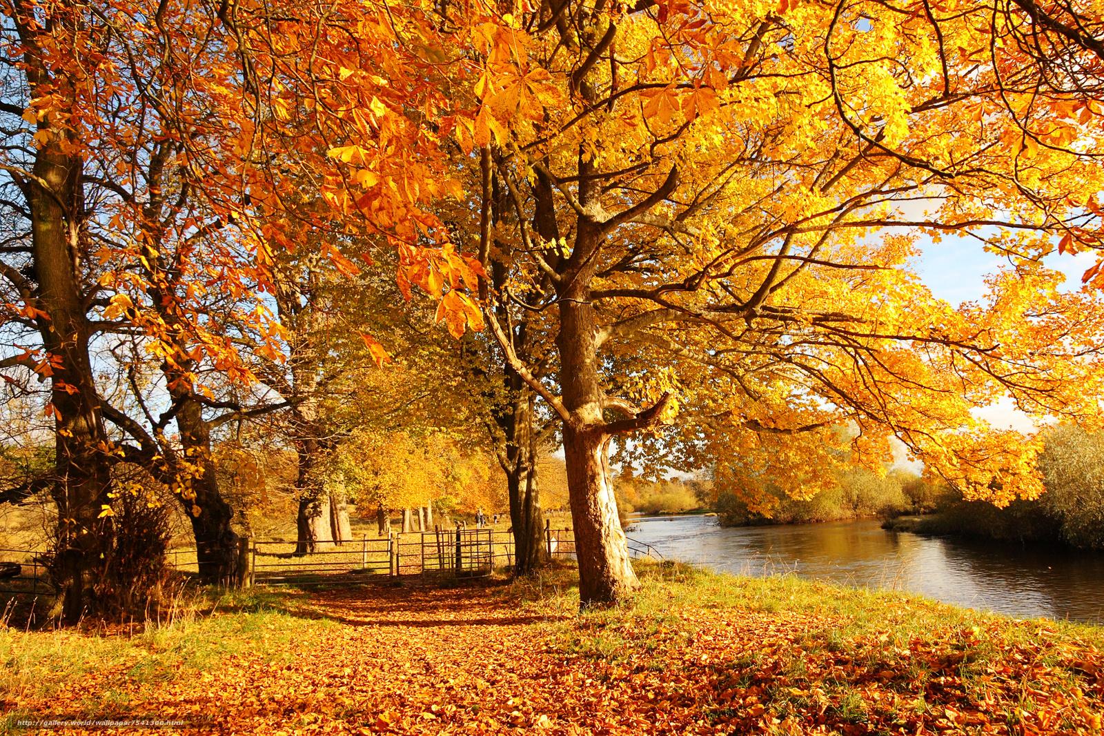Картинки на золотую осень красота осени