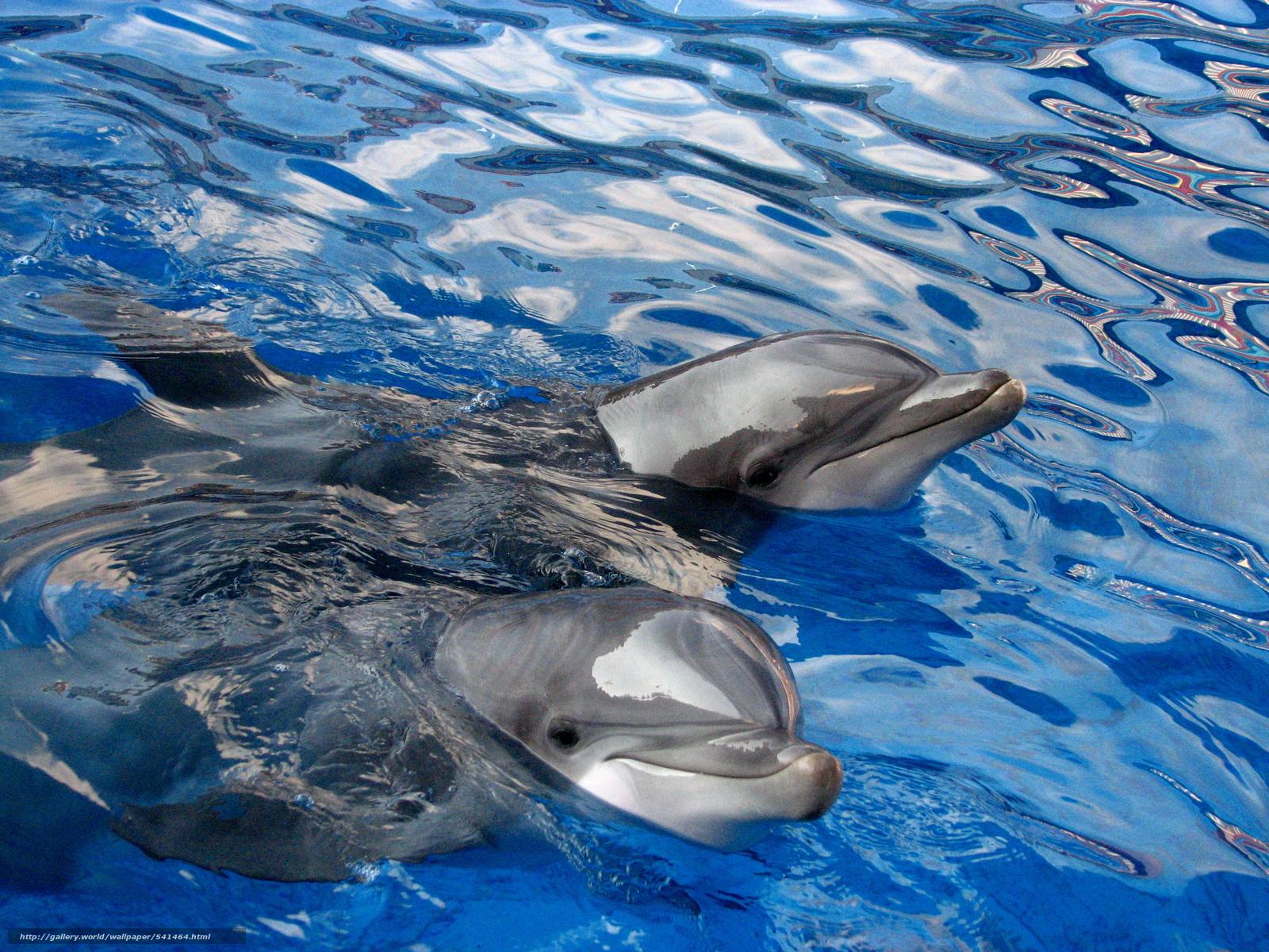 картинки рабочий стол тема дельфины зеркало делал перед