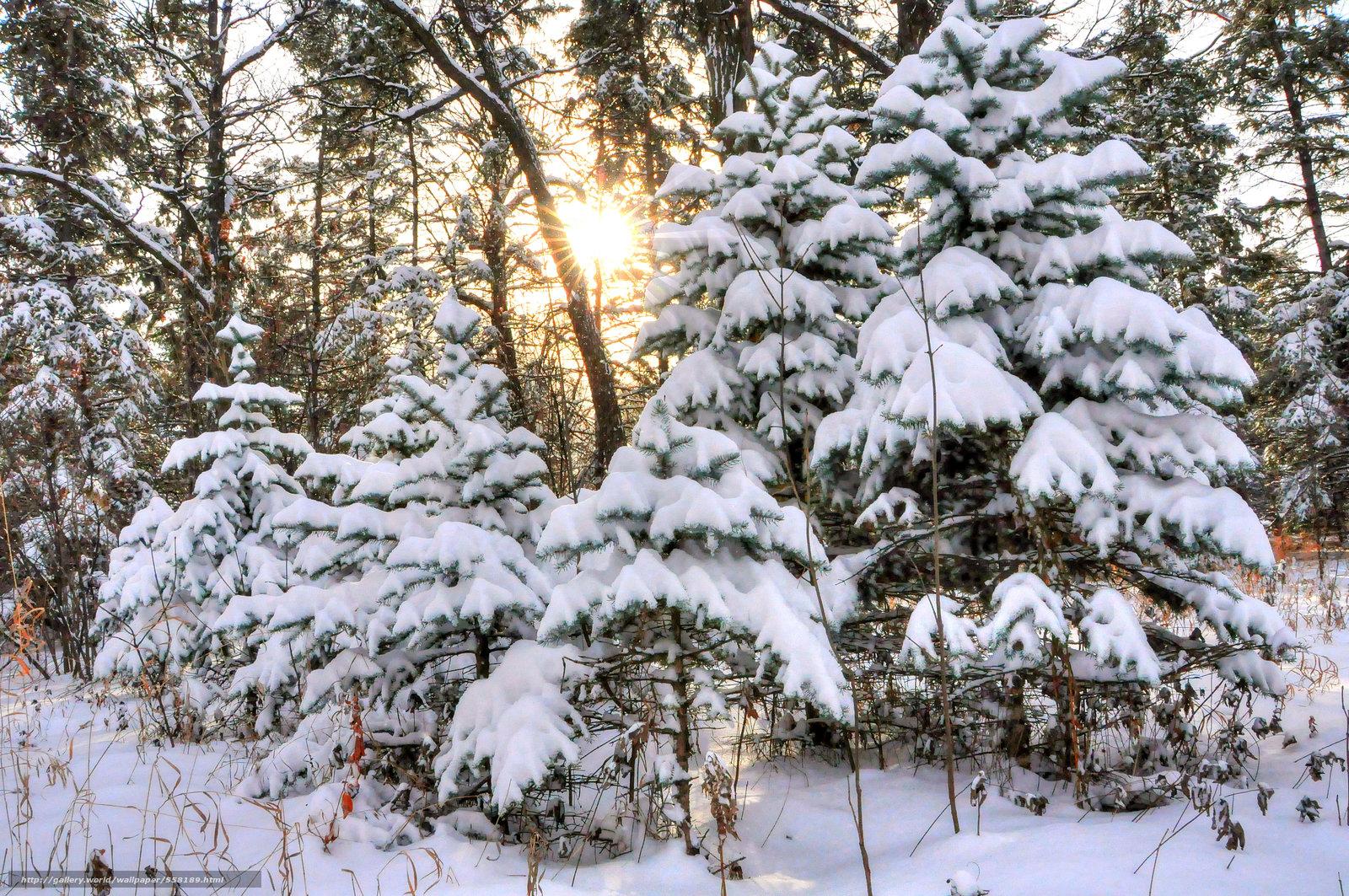 вешалка для фото зимнего леса под новый год военврач разговаривает мирным