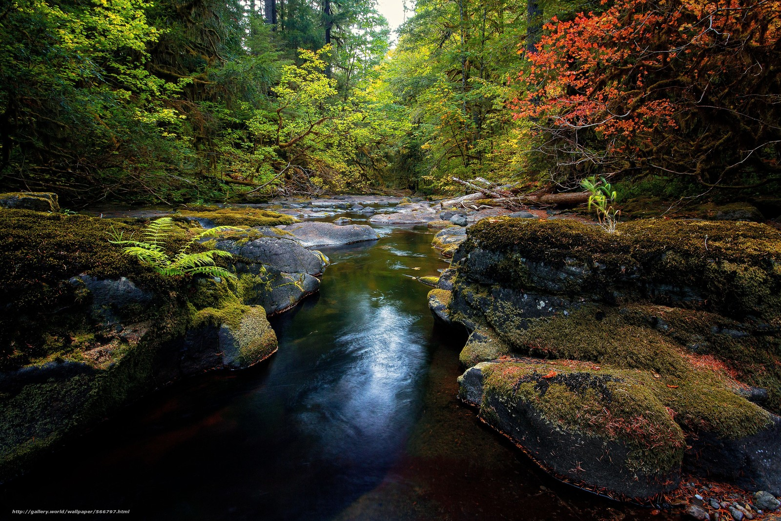 forest, trees, stones, small river, nature