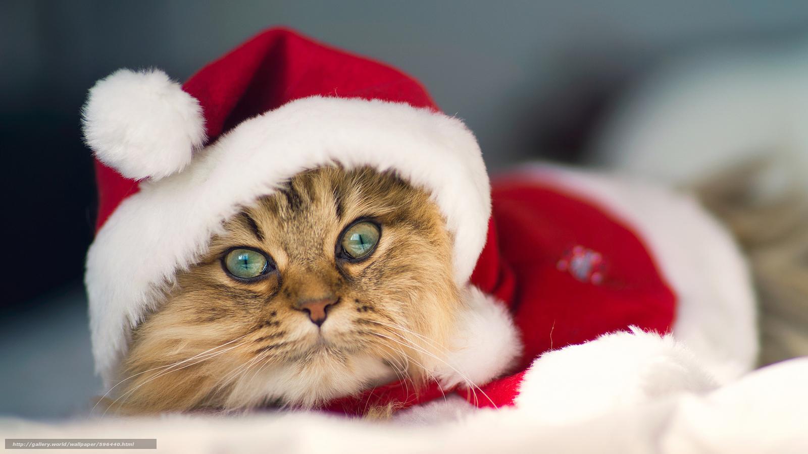 Картинки красивые смешные новый год
