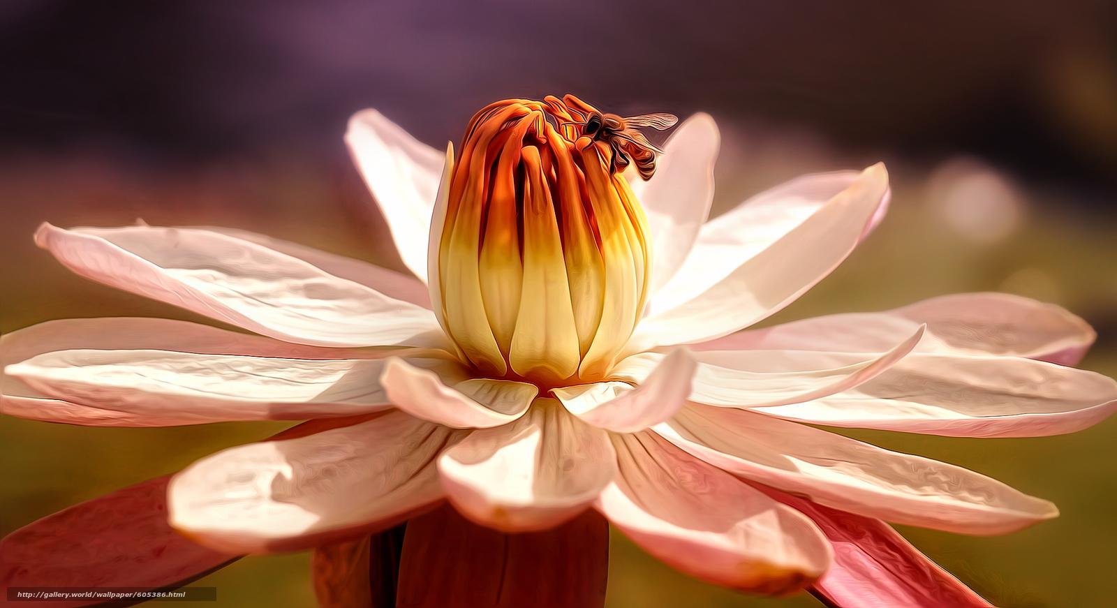 Фото картины цветы макросъемка