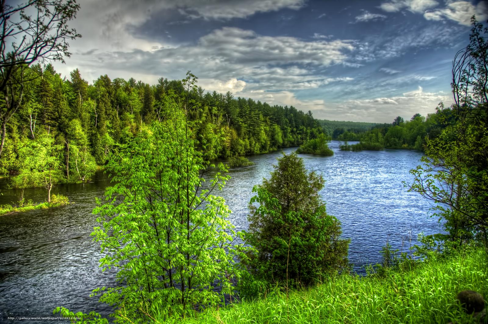 Фото природы лес речка
