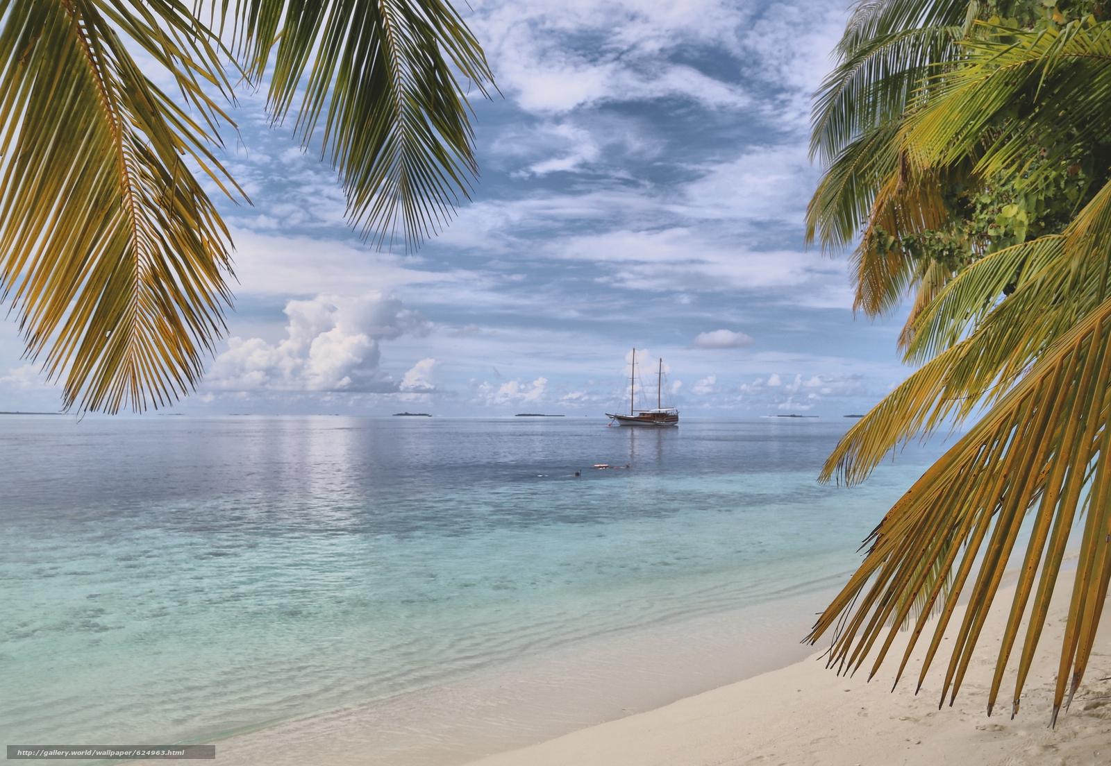 высокой вероятностью фото пальмы море парусник днях пара