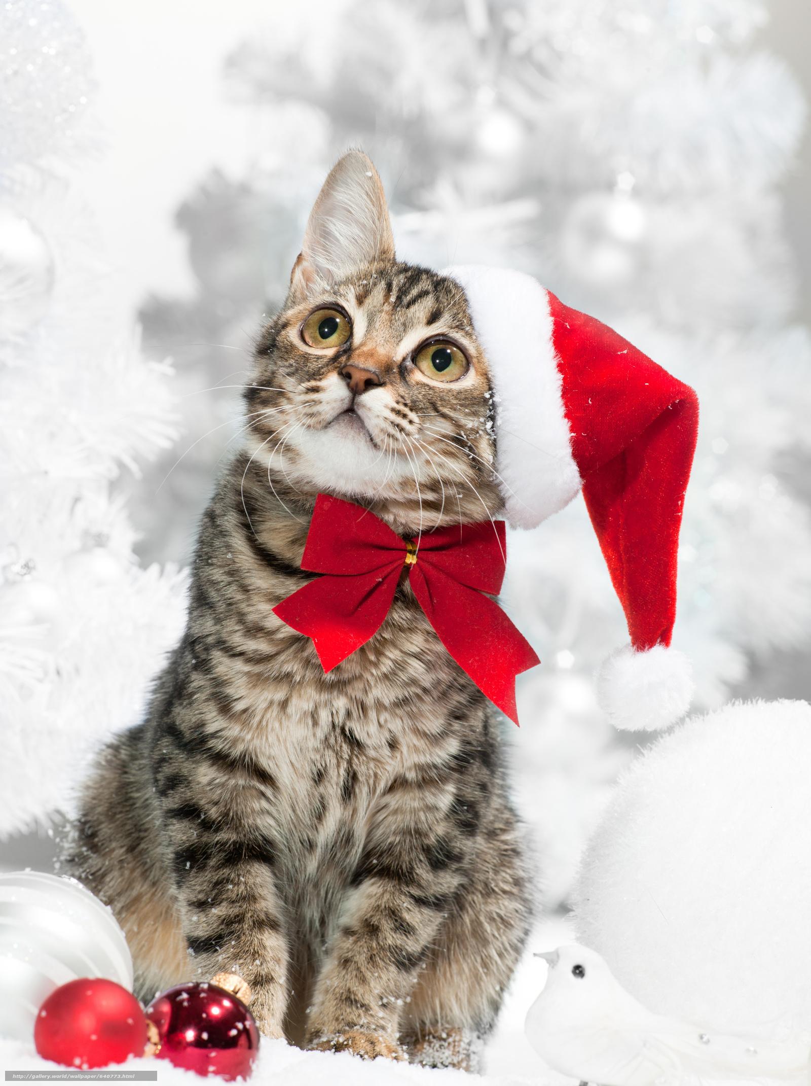новогодние фотографии с кошками болезнь