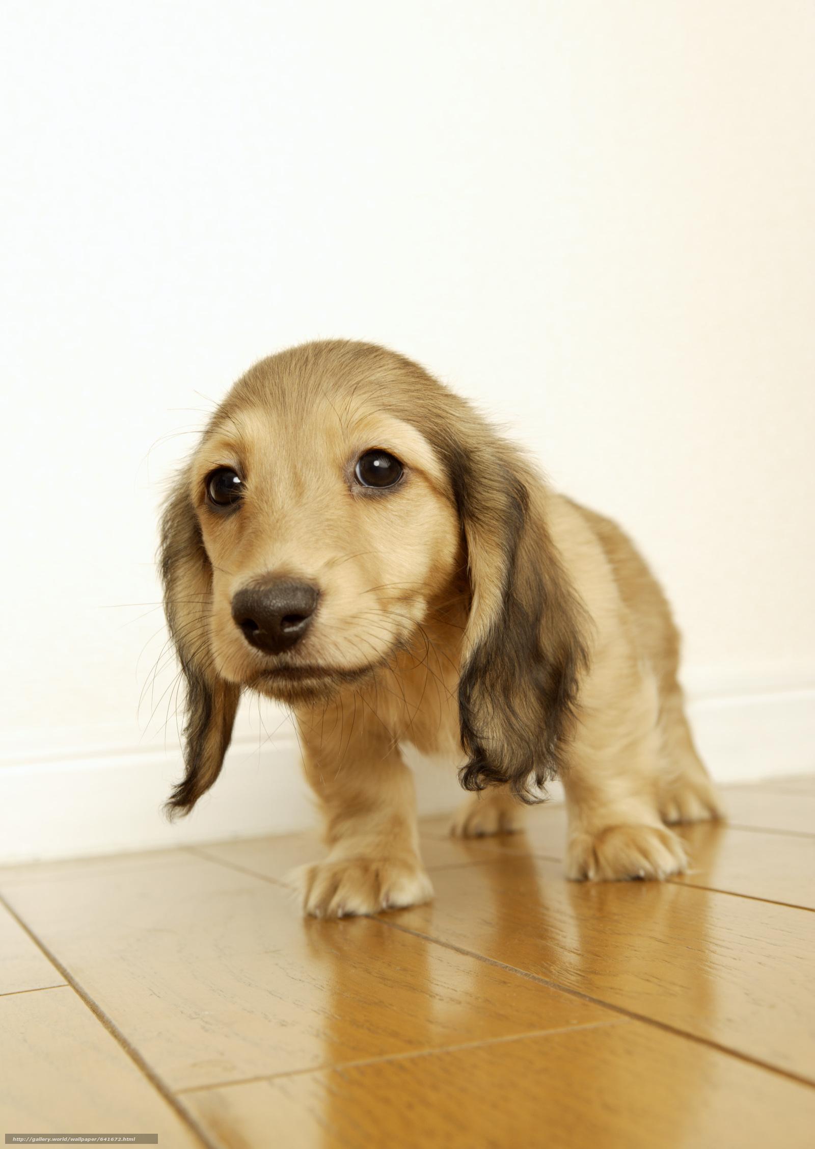 Картинка, картинка с надписью продам щенки