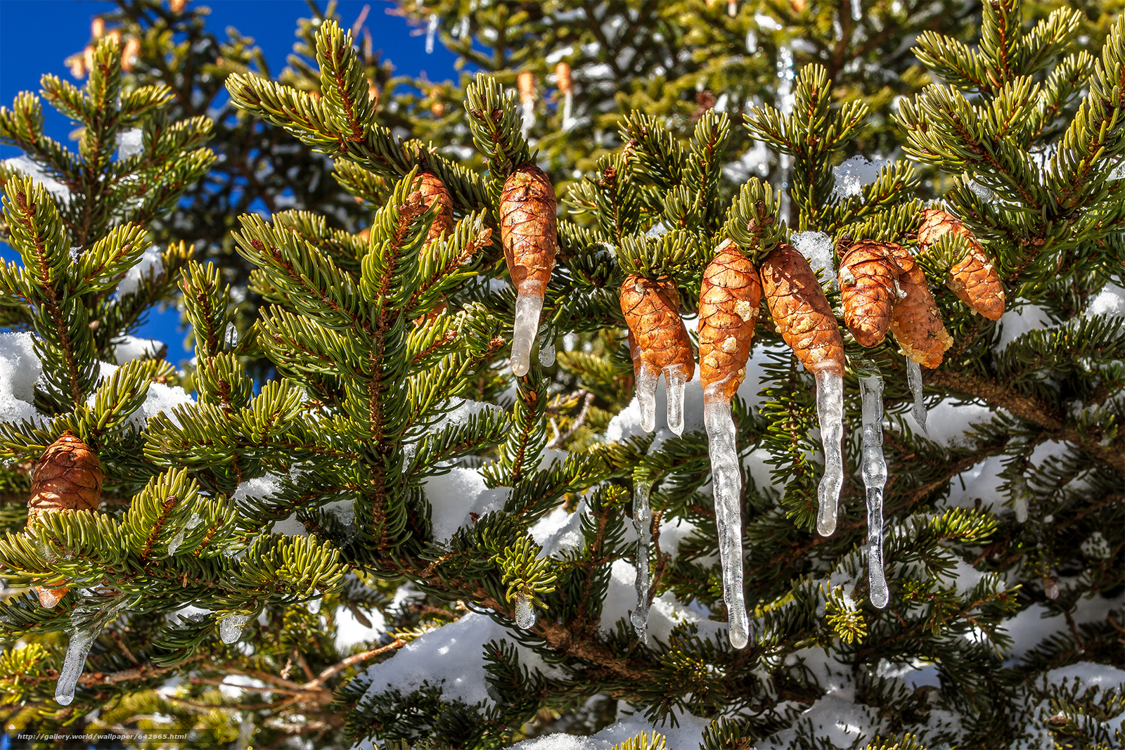 Картинки ель и шишки анимации зима