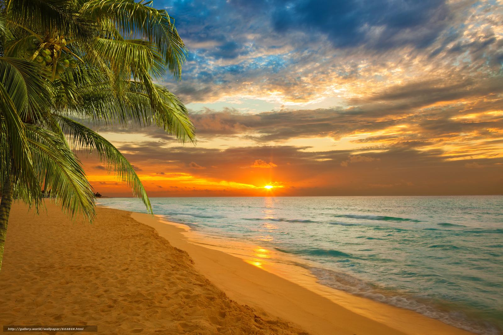 Sunset, sea, Palms, shore, landscape - #644848