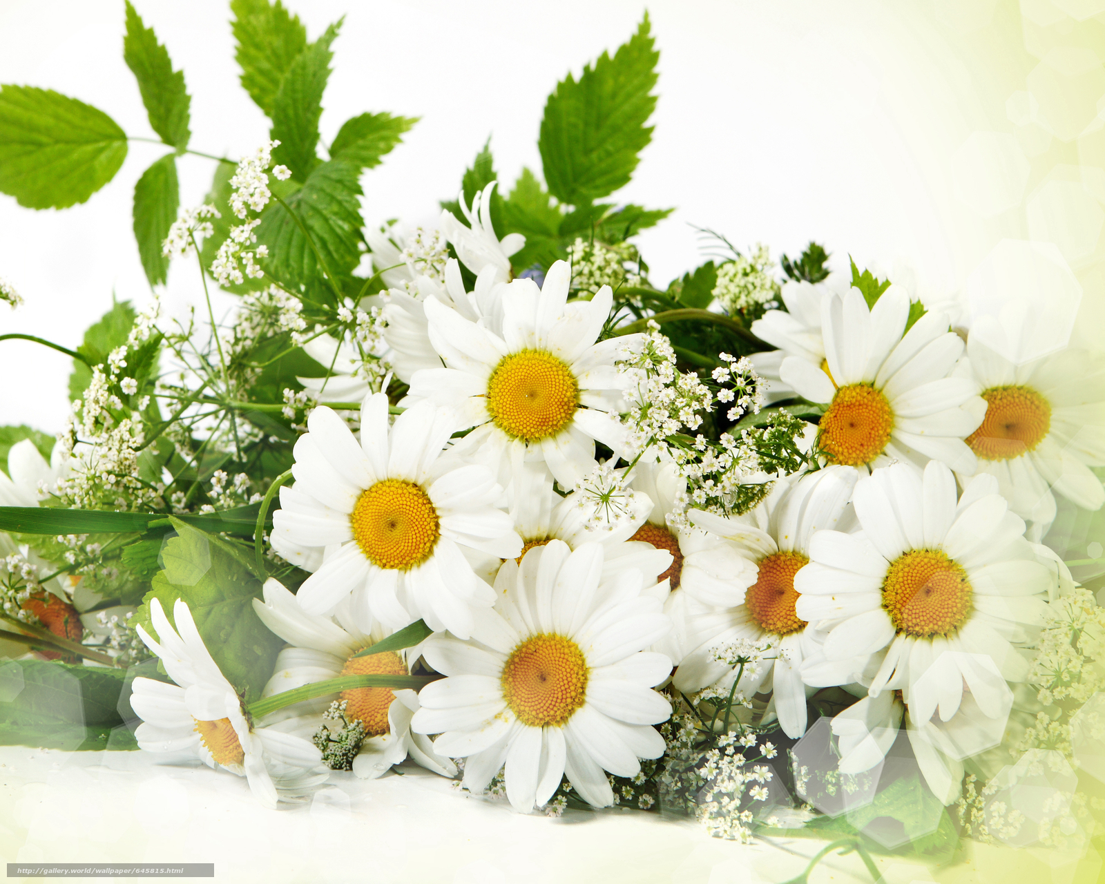 Поздравление 8 июля день семьи любви и верности картинки